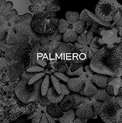 mystere_palmiero_01